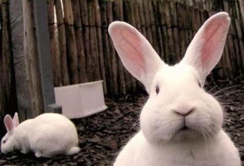 Simpatico conejo mirando a cámara
