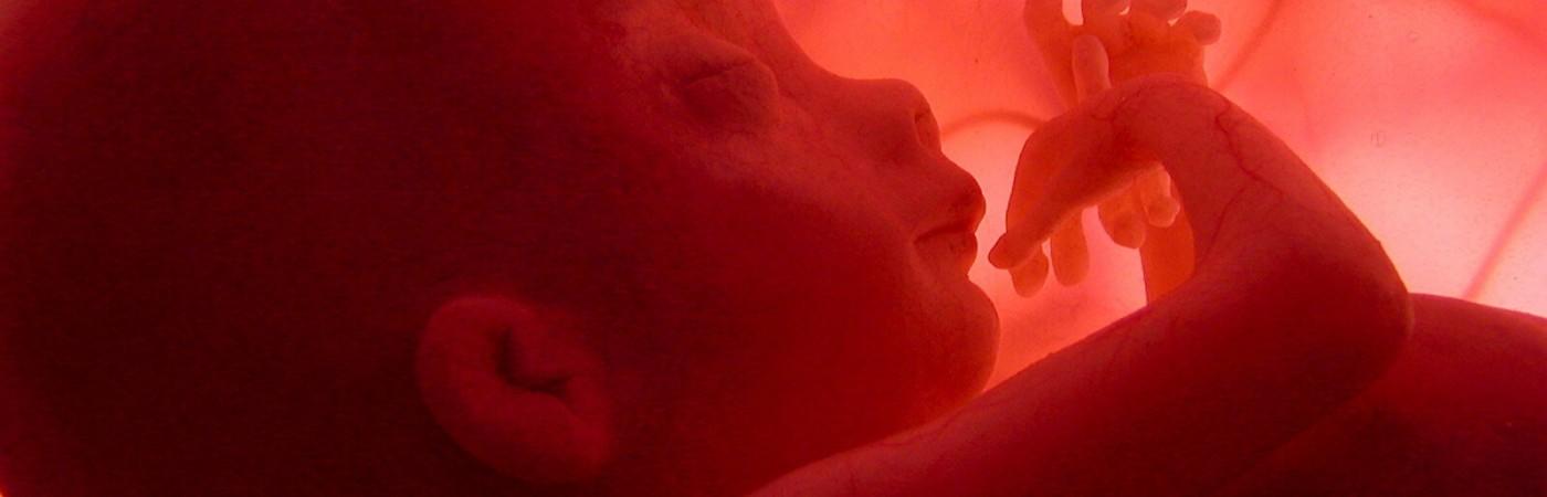 """MD.84.Madrid, 14/04/05.-National Geographic Channel presentó hoy """"En el vientre materno"""", un documental que se introduce por vez primera en el interior del útero materno para filmar los nueve meses de gestación de un feto humano. Este documental, de dos horas de metraje, se emitirá el Día de la Madre, y ha sido posible gracias a las últimas tecnologías de imágenes ultrasónicas en 3D y 4D.-EFE/ National Geographic Channel"""